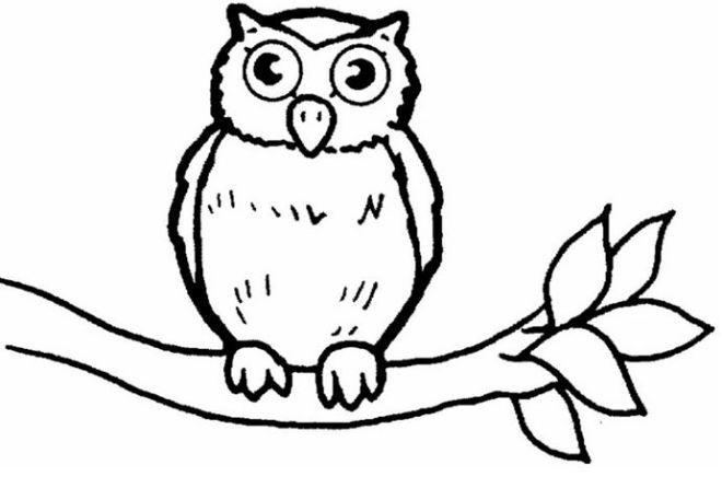 Top 50 Owl Coloring Pages 2017 Dengan Gambar Bayi Burung Hantu