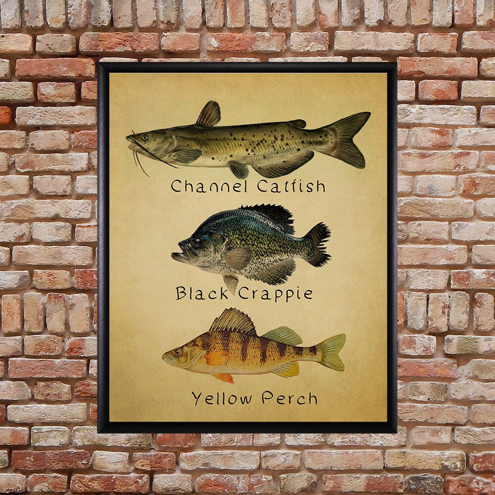 Fish Poster - Fish Print Catfish Perch Crappie Freshwater Fishing ...
