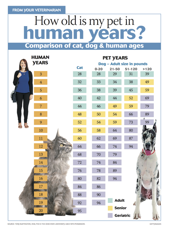 Comparison of cat, dog & human ages Senior dogs care