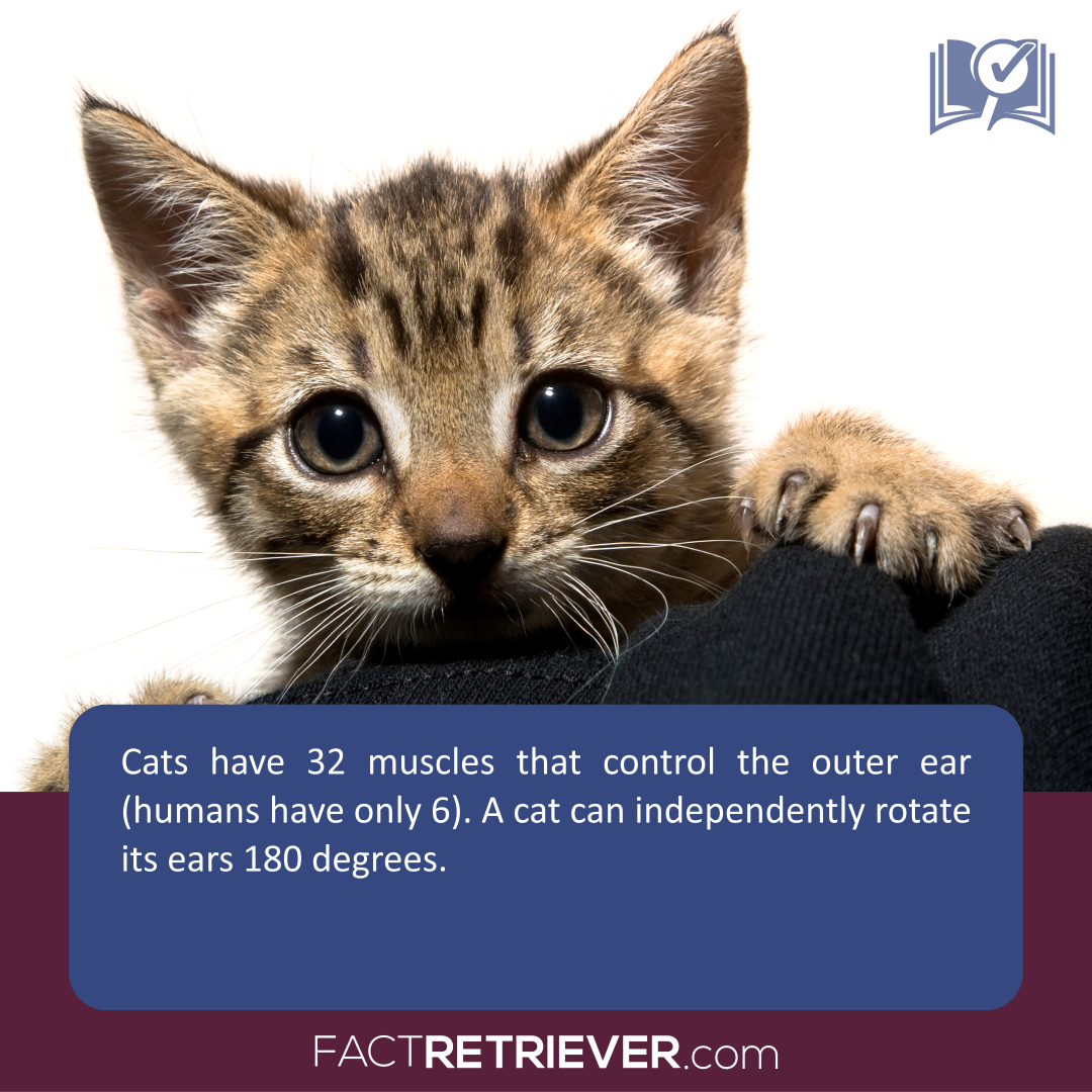104 Interesting Facts about Cats Cat facts, Cats, Dog cat
