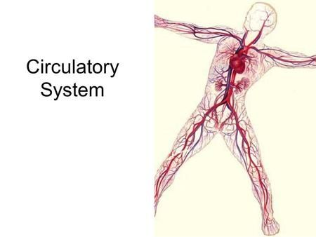 Circulatory System. Blood Heart Blood vessels Cardiovascular System ...