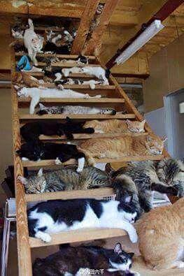Cat stairs....