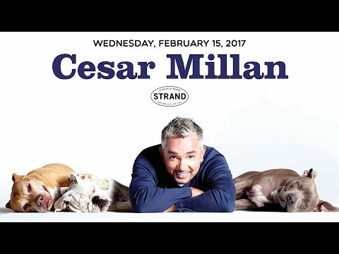 Cesar millan leader of the pack youtube