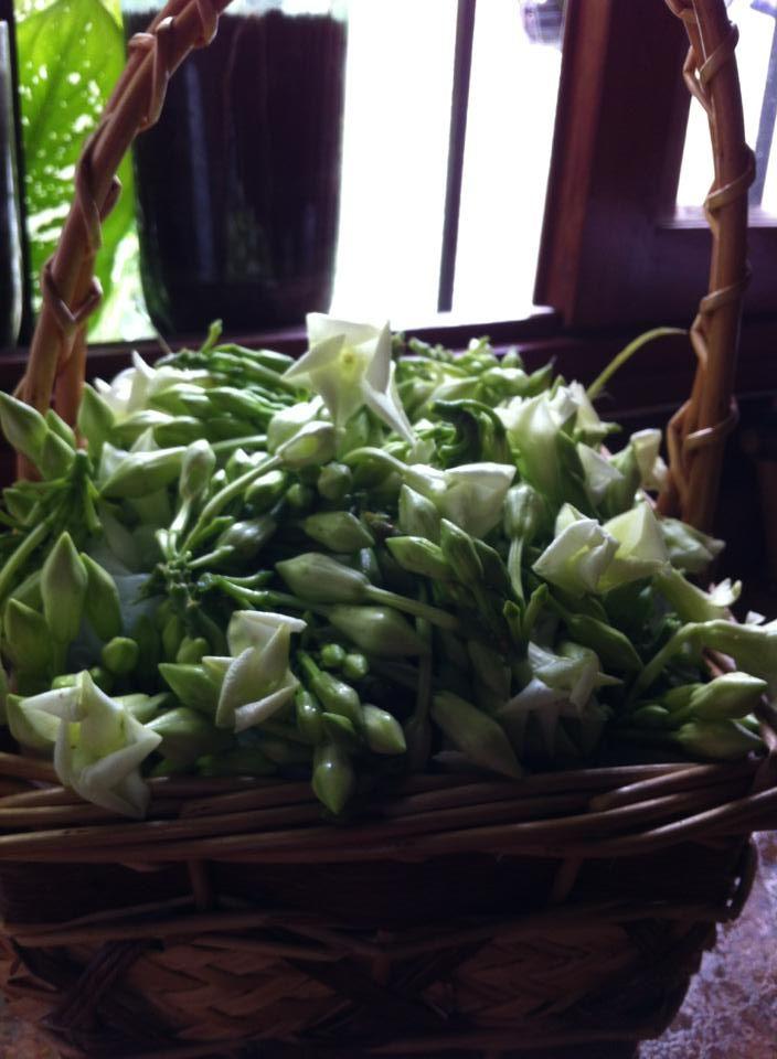 La flor de Loroco agrega sabor y se usa tradidionalmente en pupusas, queso, salsas y otras comidas; principalmente en invierno cuando se cosecha | suchitoto.tours@gmail.com