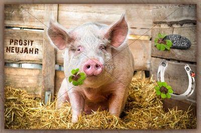 E Card Viel Glück Prosit Neujahr Schwein Gehabt 273