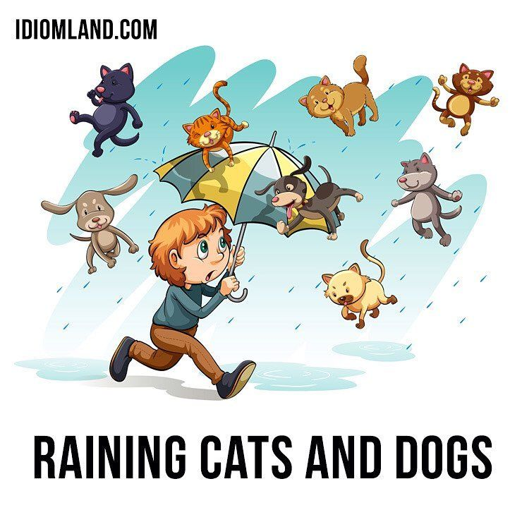 Image May Contain Text Raining Cats And Dogs Idioms Dog Cat
