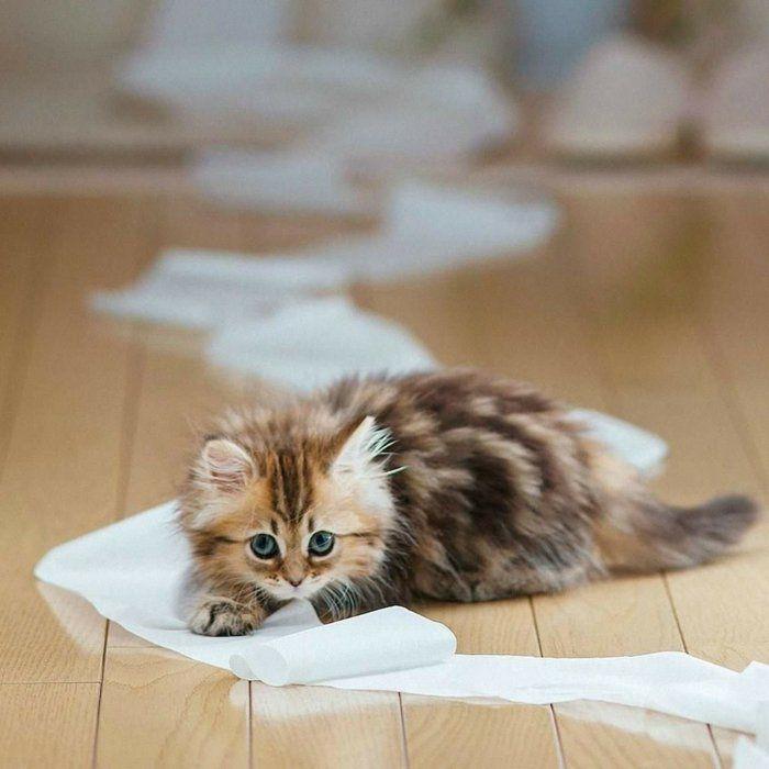 katze erziehen und sie verstehen k nnen 40 bilder von niedlichen katzen katzen katzen. Black Bedroom Furniture Sets. Home Design Ideas
