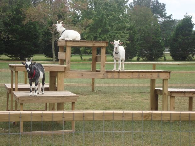 Klettergerüst Ziegen : Goat toys playground ideas pinterest ziege lustige