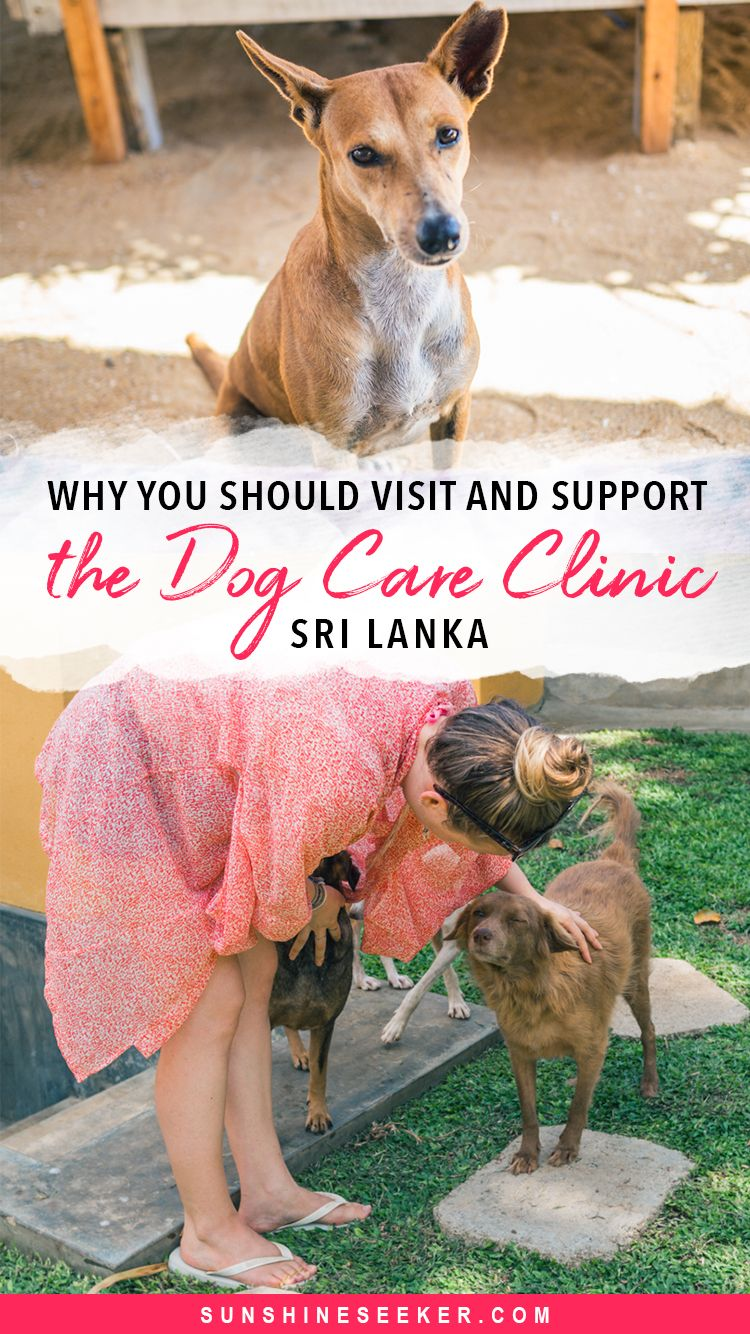 An emotional visit to the Dog Care Clinic, Sri Lanka