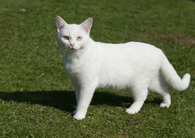 White Cat Warrior Cats Clans Warrior Cat Names White Cats