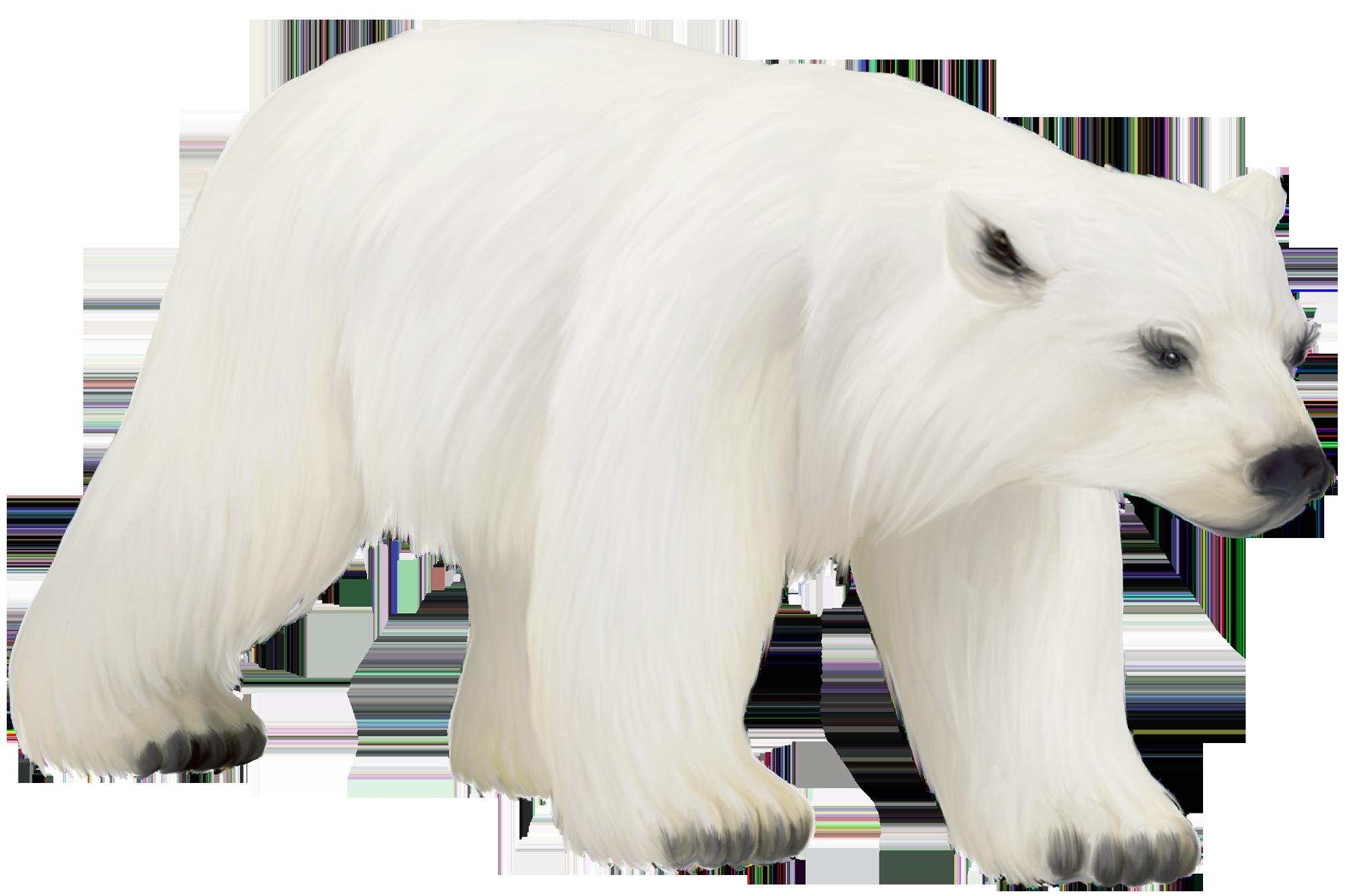 large painted png polar bear clipart bears pinterest polar rh pinterest com polar bear clipart png polar bear clip art printable