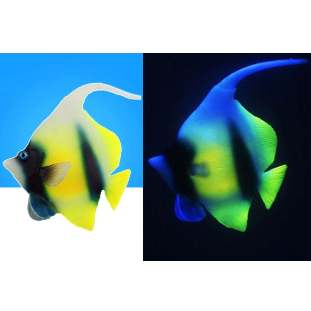 Visit To Buy New Arrivel Fish Tank Decorative Super Cute