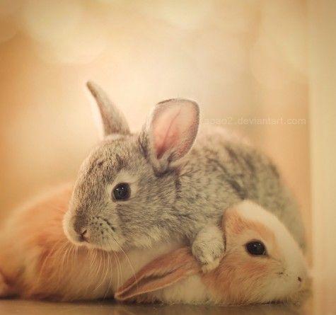 Rabbits #animal   Photography by Essa Al Mazroee