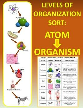 Levels Of Organization In Living Things Sort Atom To Organism Science Teaching Resources Sixth Grade Science Critical Thinking Skills