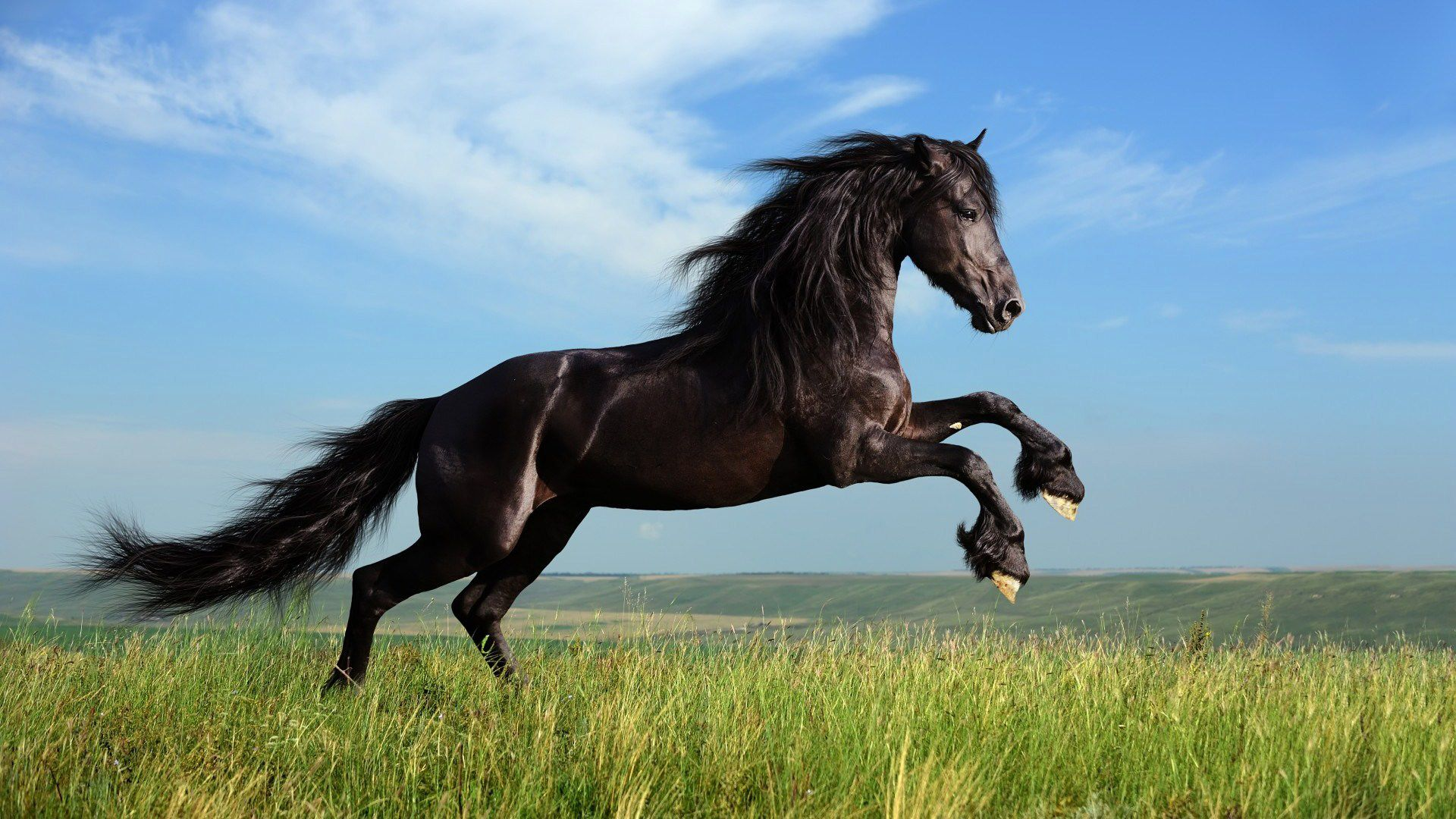 Wonderful Wallpaper Horse High Quality - 93fa1c497d00cfbbfbadf7a4c00c2b76  Trends_289514.jpg