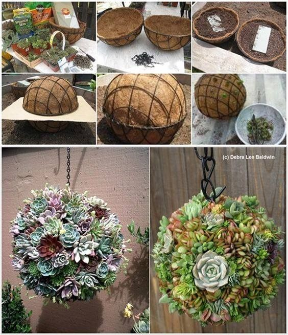 Succulent ball made by joining two hanging baskets together