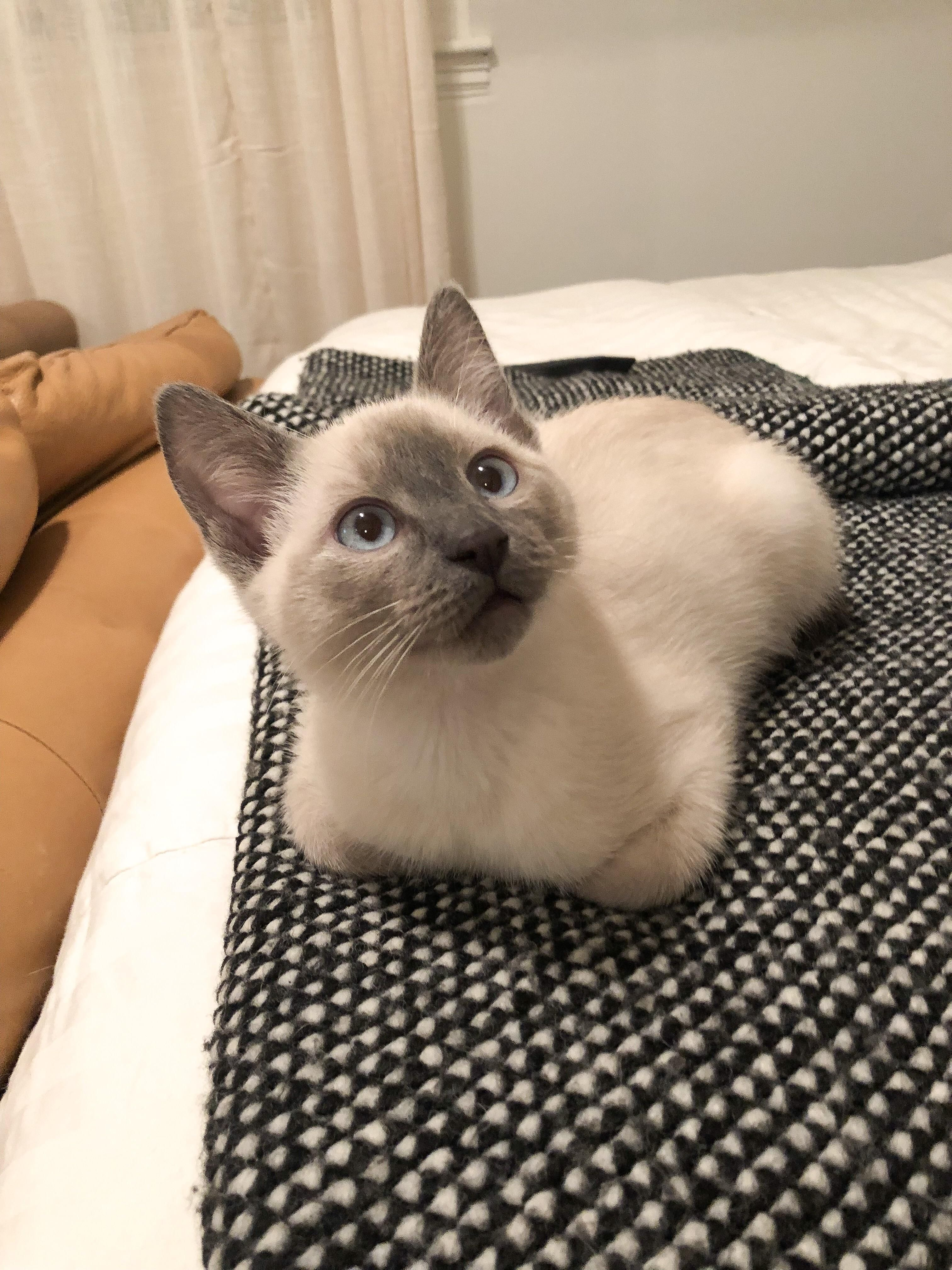 I Think This Is The Definition Of A Loaf Hello There Bright People Are You Catlover Or Have You Any Pretty C Cute Cats Pretty Cats Cute Cats And Kittens