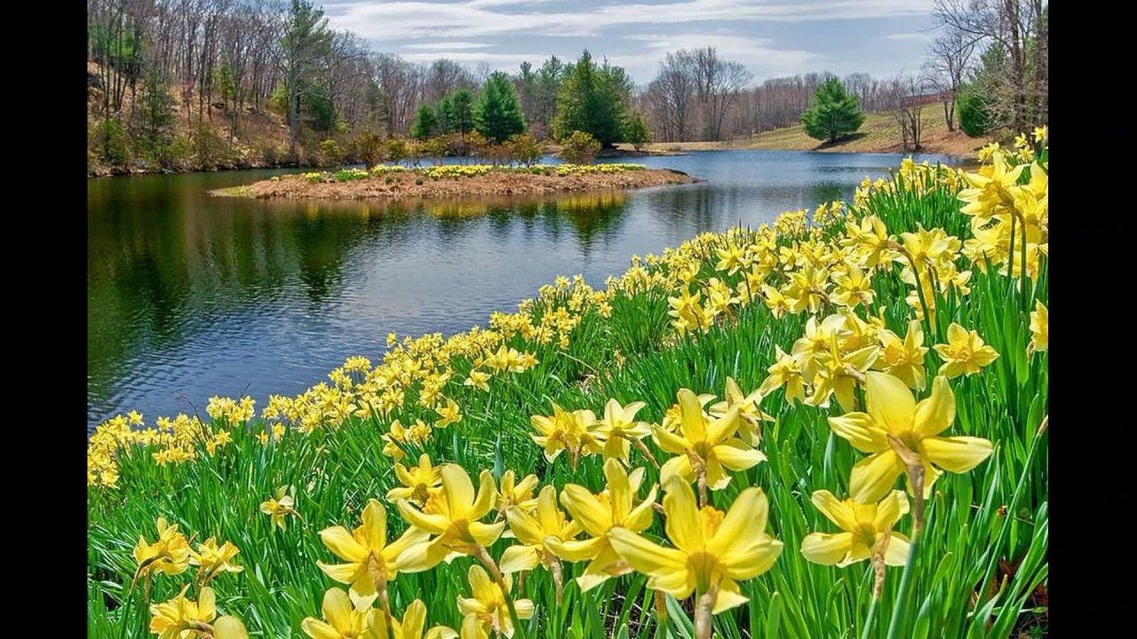 The Daffodils (poem) explanation in Urdu Daffodils