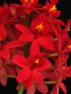 La Orquídea Es La Flor Más Hermosa Del Mundo Plants