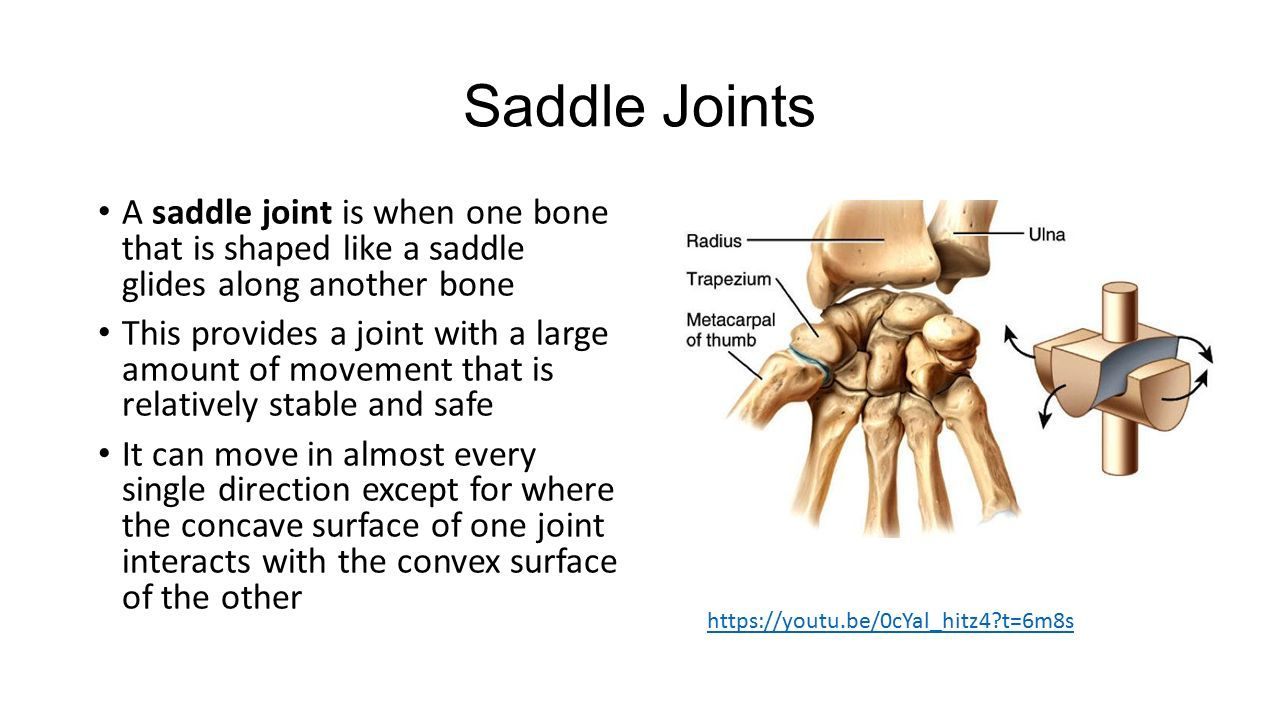Image Result For Saddle Joint Asr Basic Anatomy Physiology