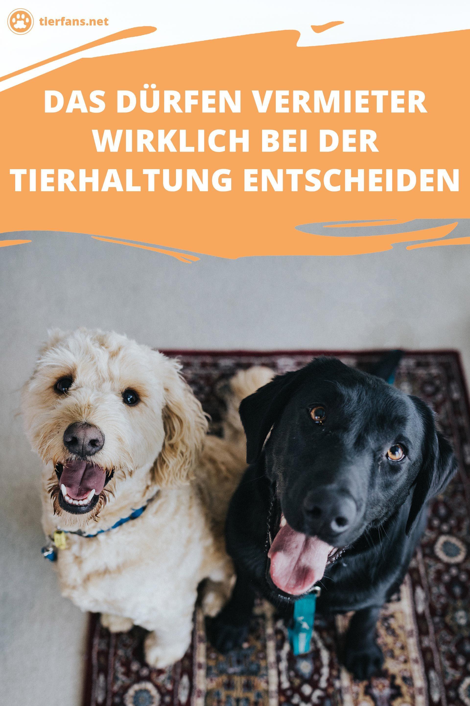 Urteil Gesprochen Das Haben Vermieter Bei Haustieren Wirklich Zu Entscheiden Haustiere Tiere Tier Fakten