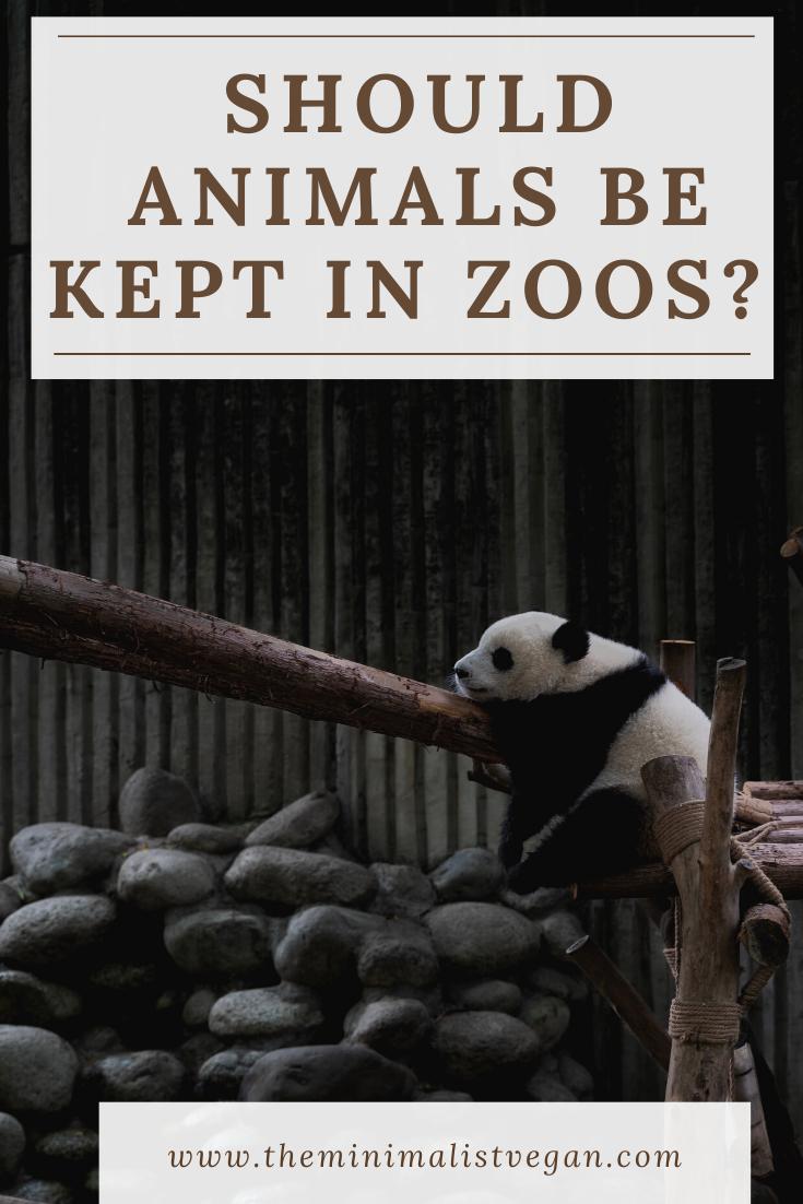 Should Animals Be Kept In Zoos The Minimalist Vegan Animals Zoo Zoo Animals