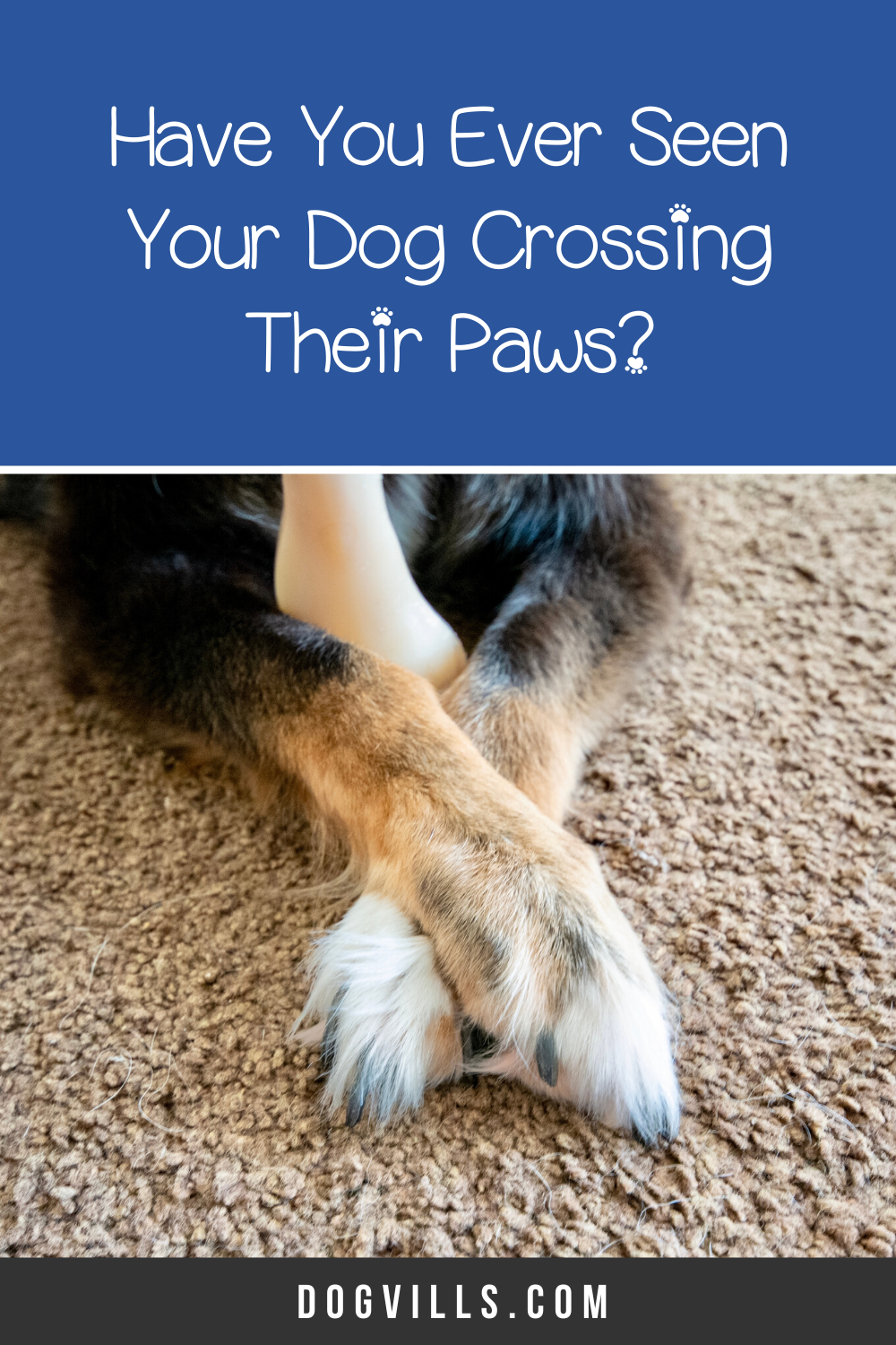 Dogs Crossing Their Legs Pictures
