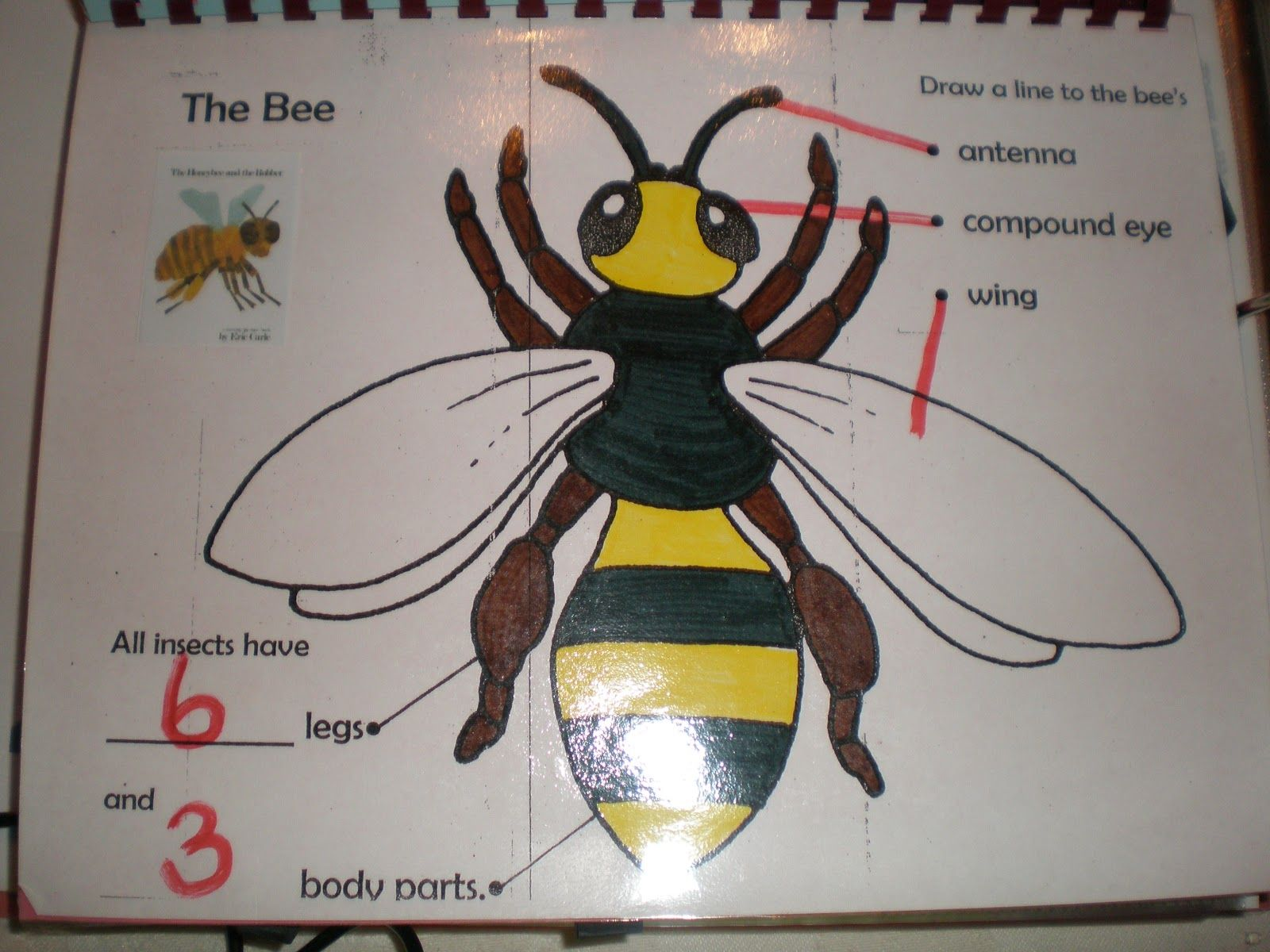 Labelled Diagram Of A Bee For Children Manual Guide