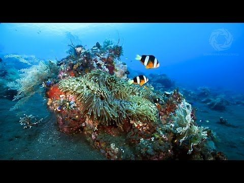 Video Marine Biology   Learn About Coral Growth Forms Water