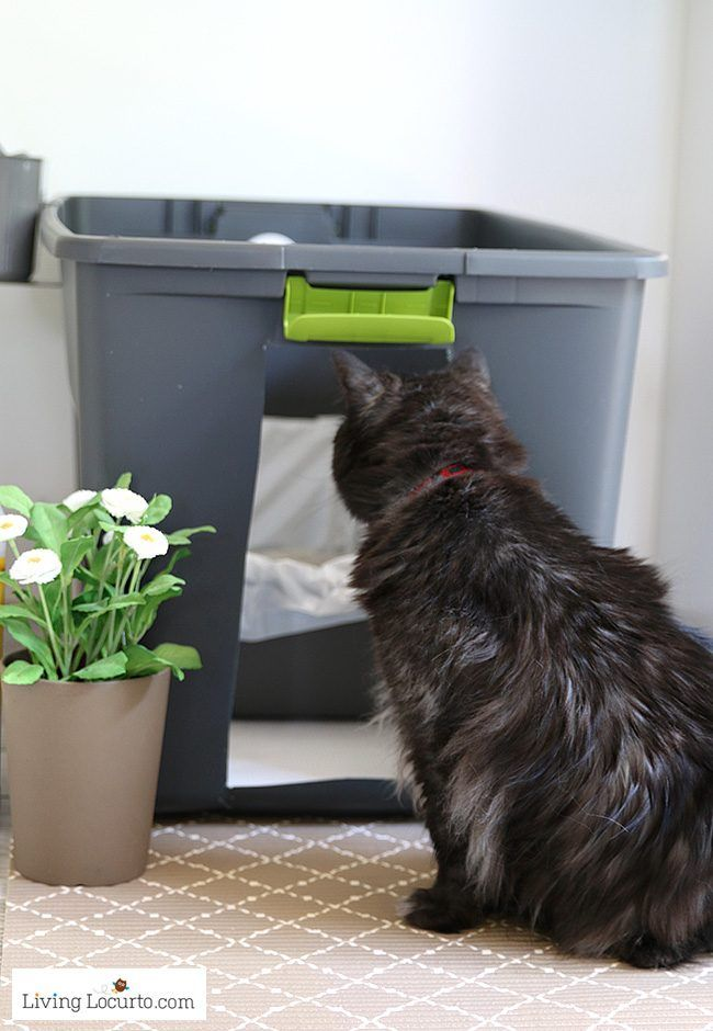 DIY Cat Litter Box Holder | Easy Way to Hide Kitty Litter | Things ...