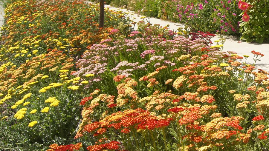 Growing the rainbow | That narrow strip of land between the sidewalk and street—you know, the spot that the sprinklers don't quite reach—has a big impact on your home's curb appeal. Here are our favorite ideas to transform your hellstrip into a little patch of heaven