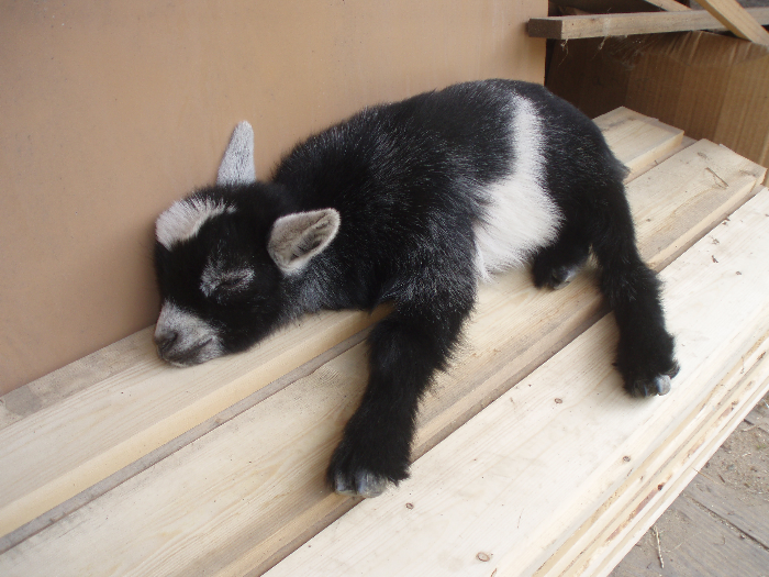Jeepers Sleepers Cute animals, Baby animal names, Cute