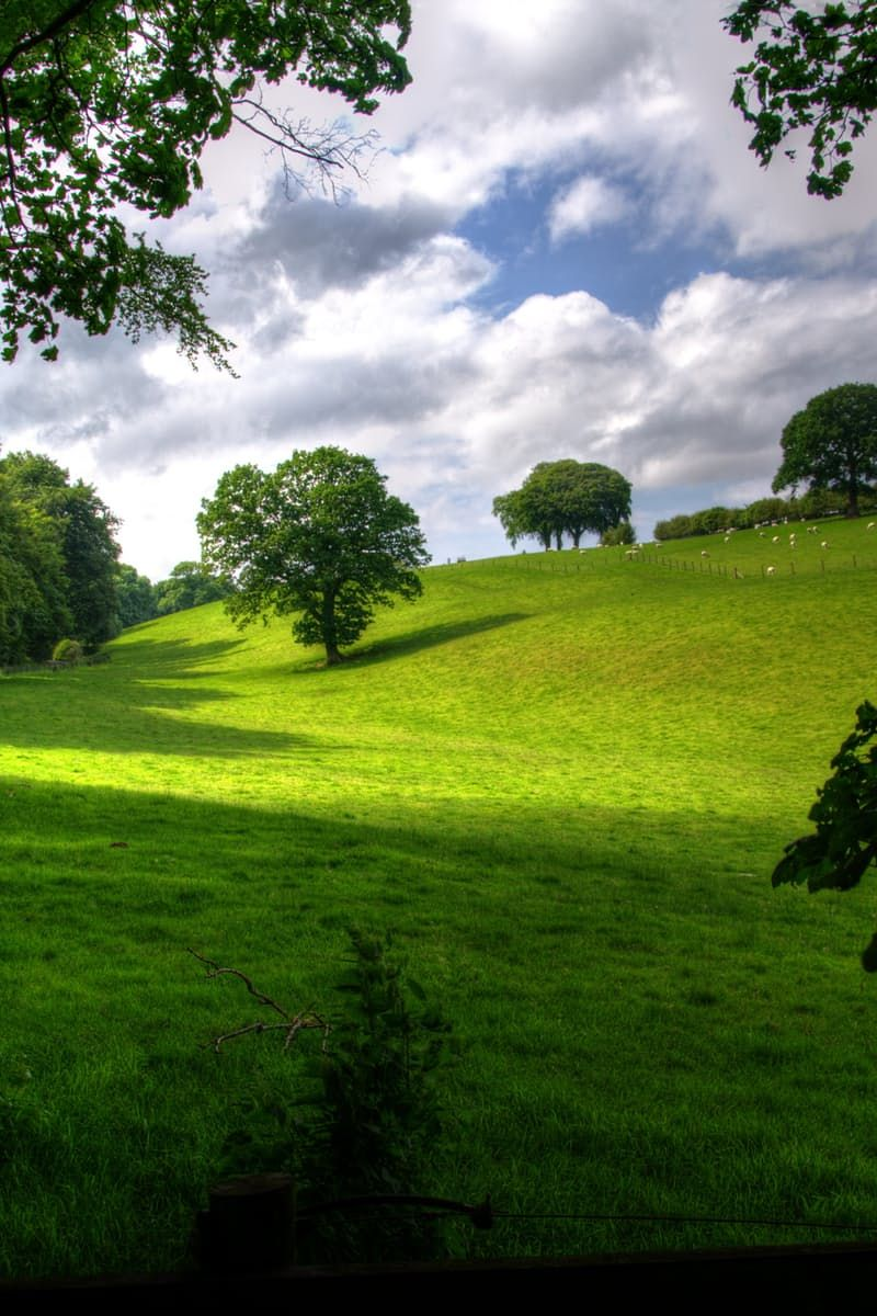 Green Hill With Tree Under White Clouds and Blue Sky during Daytime