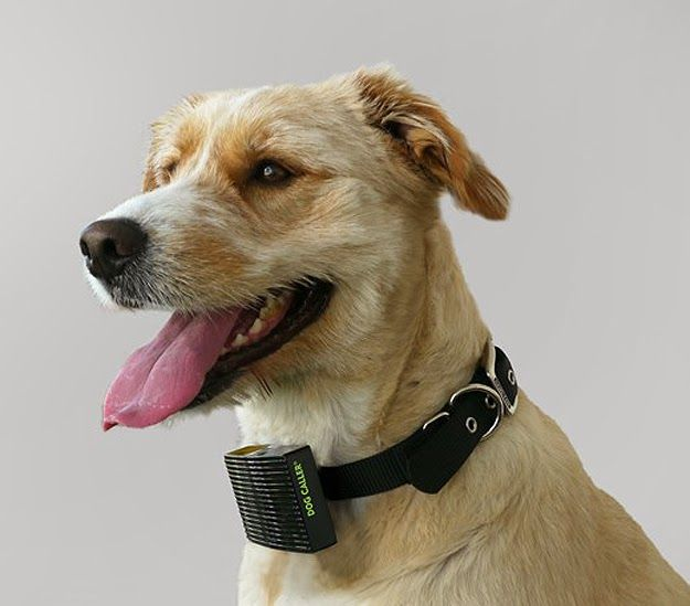 Dog Collar Cars Kill Dogs Toronto Humane Society Tech Dog