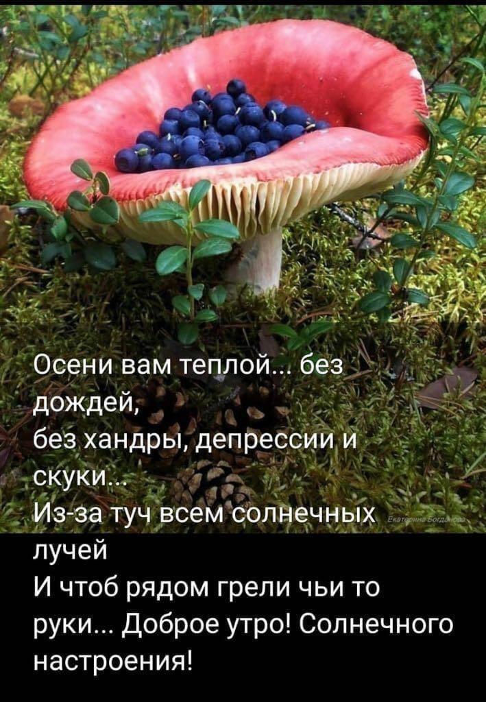 Odnoklassniki Utrennie Citaty Dobroe Utro Osen