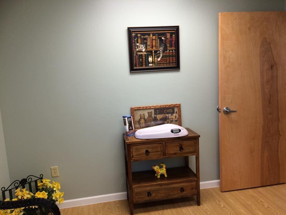 Cat friendly room! vet StowOhio Pet clinic, Pets