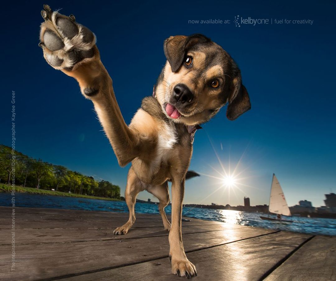 The Secrets To Capturing The Best Dog Photos Ever Taken KelbyOne - Loveable dog portraits capture mans best friend from a funny perspective