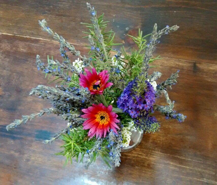 Lavender, Rosemary, Sweet Alyssum, Miniature Budlaea (With