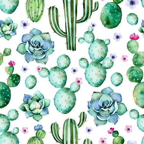 Succulent Wallpaper Tumblr Image Gallery - HCPR