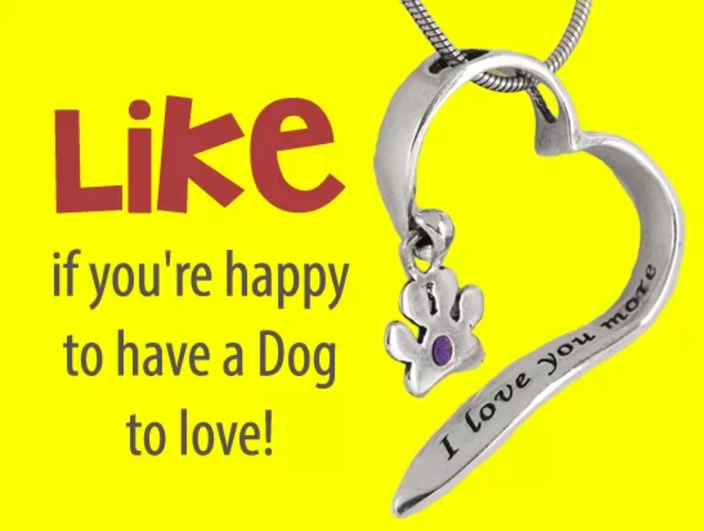 #DogsLife #CanineKing #DogsBestFriend #GMEABM #MansBestFriend