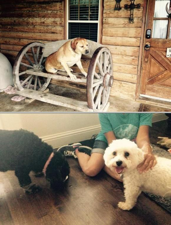 Do You Want To Find A Pet Sitter For Your Beloved Puppy Consider