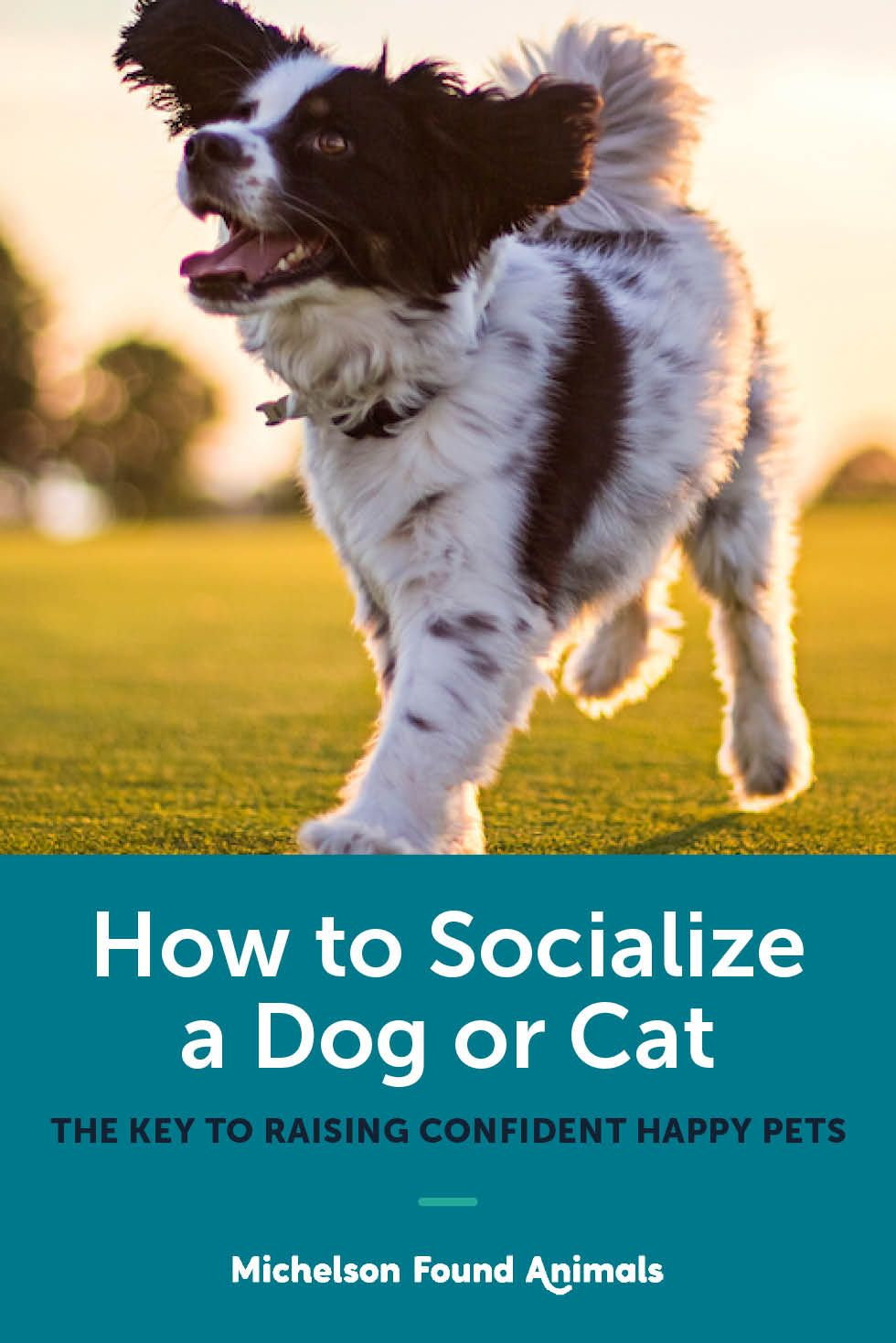 How To Socialize A Dog Or Cat Dogs Pets Cats