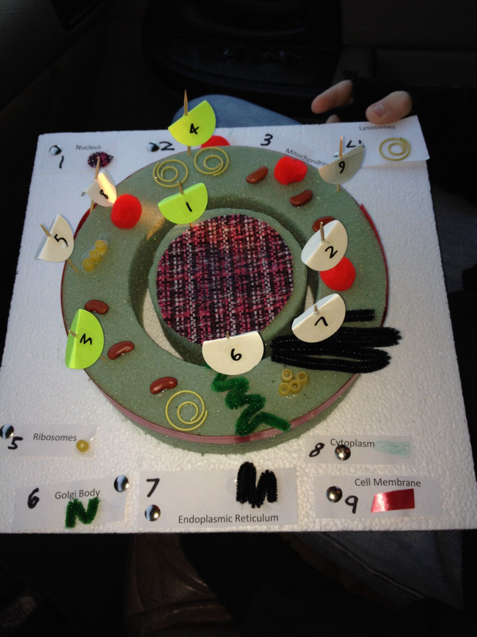 Ryan S 7th Grade Animal Cell Project