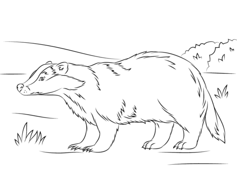 Pin By Amber Lopes On Zvirata Badger Pictures Coloring Pages Honey Badger