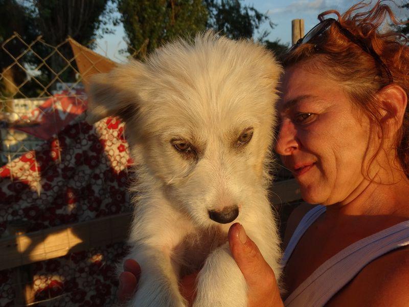 Pin Von Susannetreib Auf Hunde Hunde Tiere Tierschutz