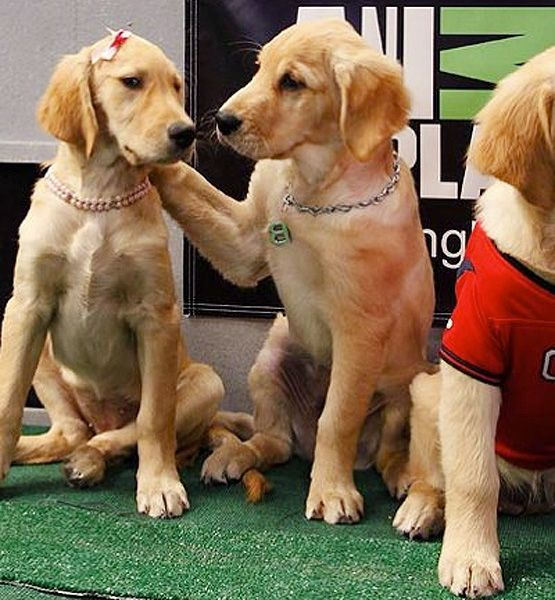 Don T Worry I Ll Show You The Ropes Adorable Animals Puppies