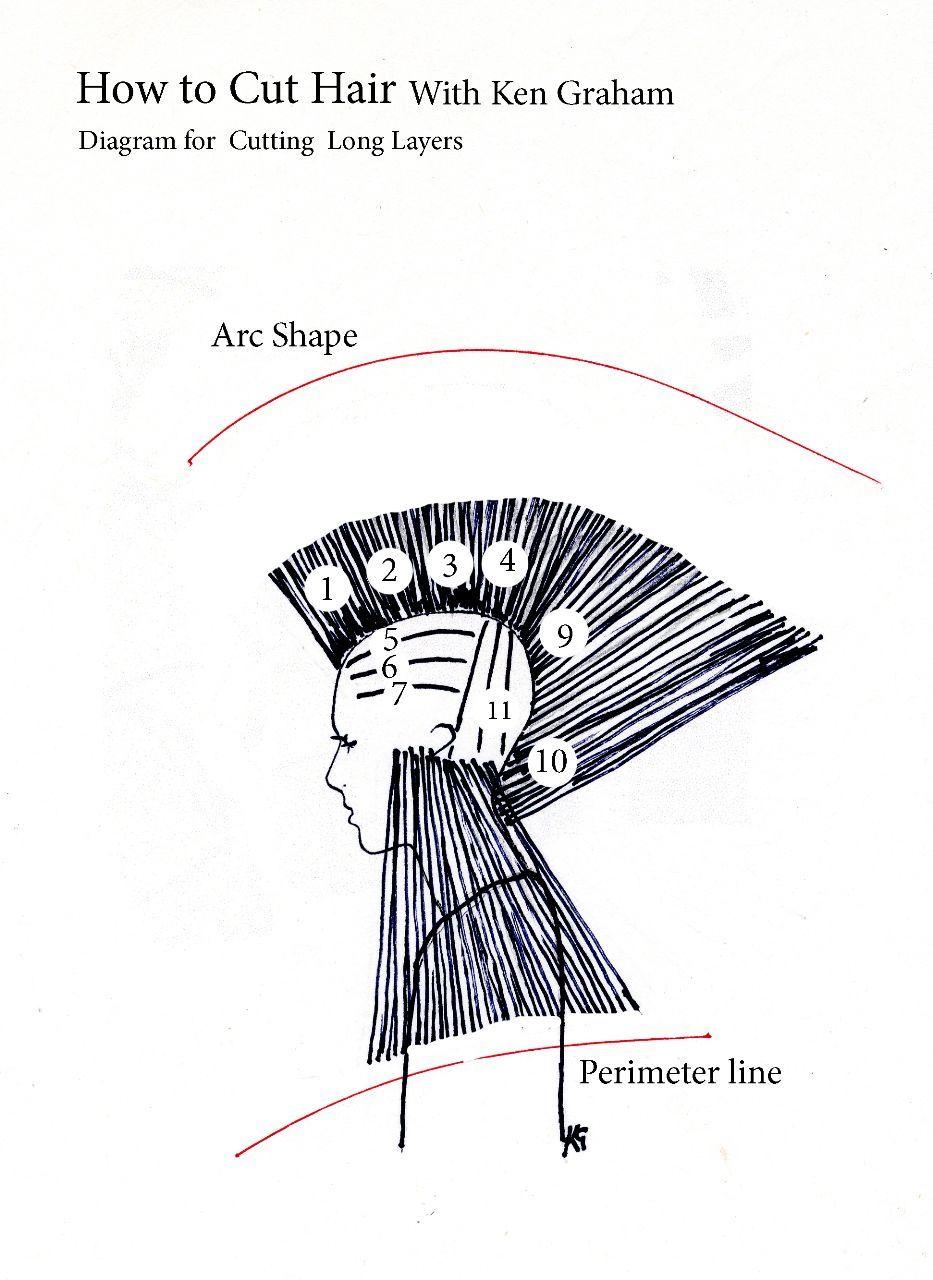 Haircutting - How to do a Uniform Layered Cut | diagram haircut ...