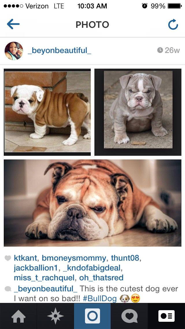 I want one of these dogs so bad they're so cute!!