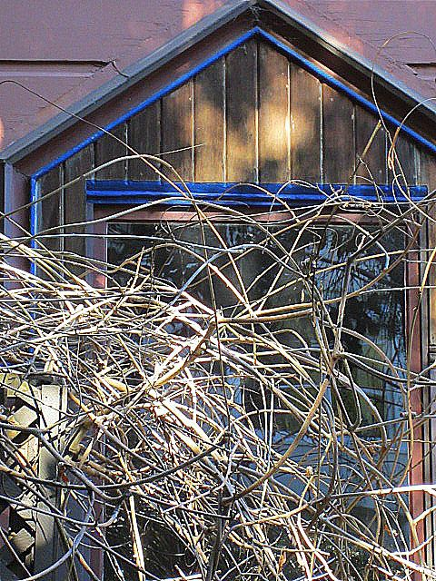 Tangle at window (Filbert Steps, San Francisco; photo by