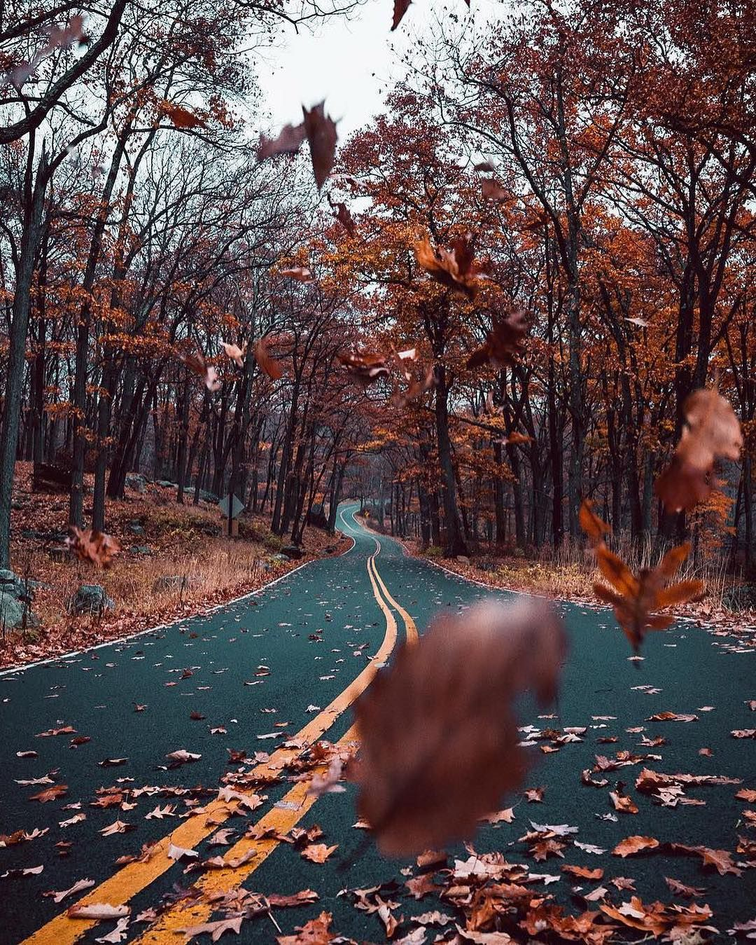 Resultado de imagen de paisajes de otoño pinterest
